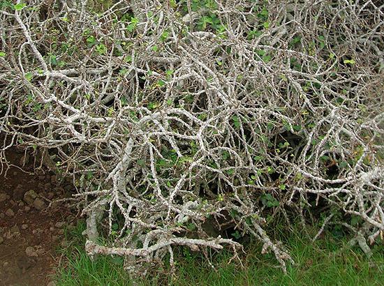 いちじくの木を枯らす奇跡2